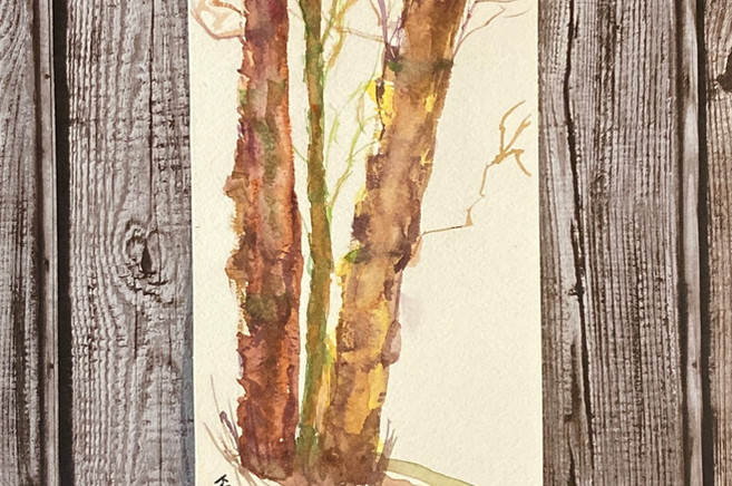 Colorful Birch Trees Watercolor