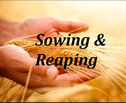 Sowing Reaping