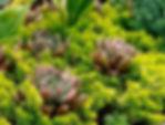Drought Tolerant Plants.jpg