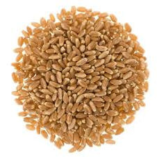 wheat pic 9.jpg