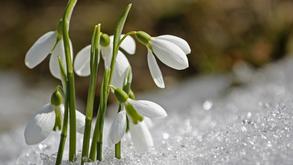 Verbinde dich mit der Frühlingsenergie - drei kleine Übungen