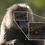 Thumbnail: FE 200-600mm F5.6-6.3 G OSS