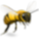 3-bee-png-image.png