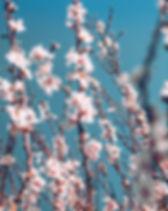 pexels-photo-3820994.jpeg