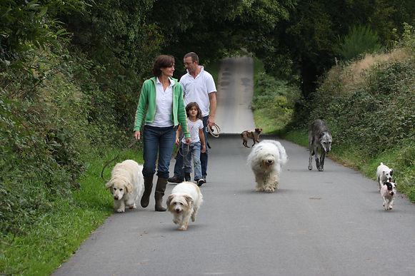 chiens (3).jpg