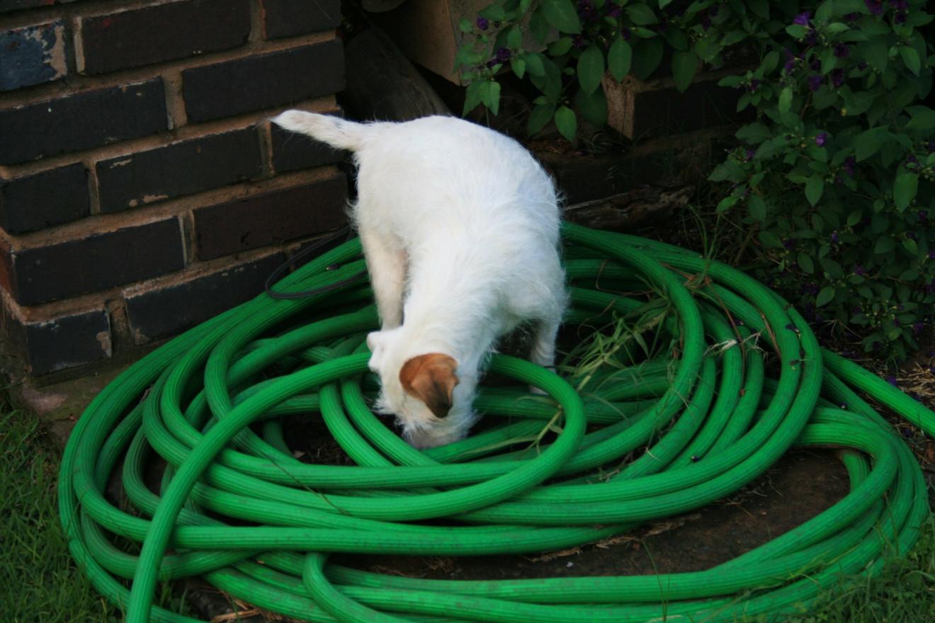 white-dog-278203_1920.jpg