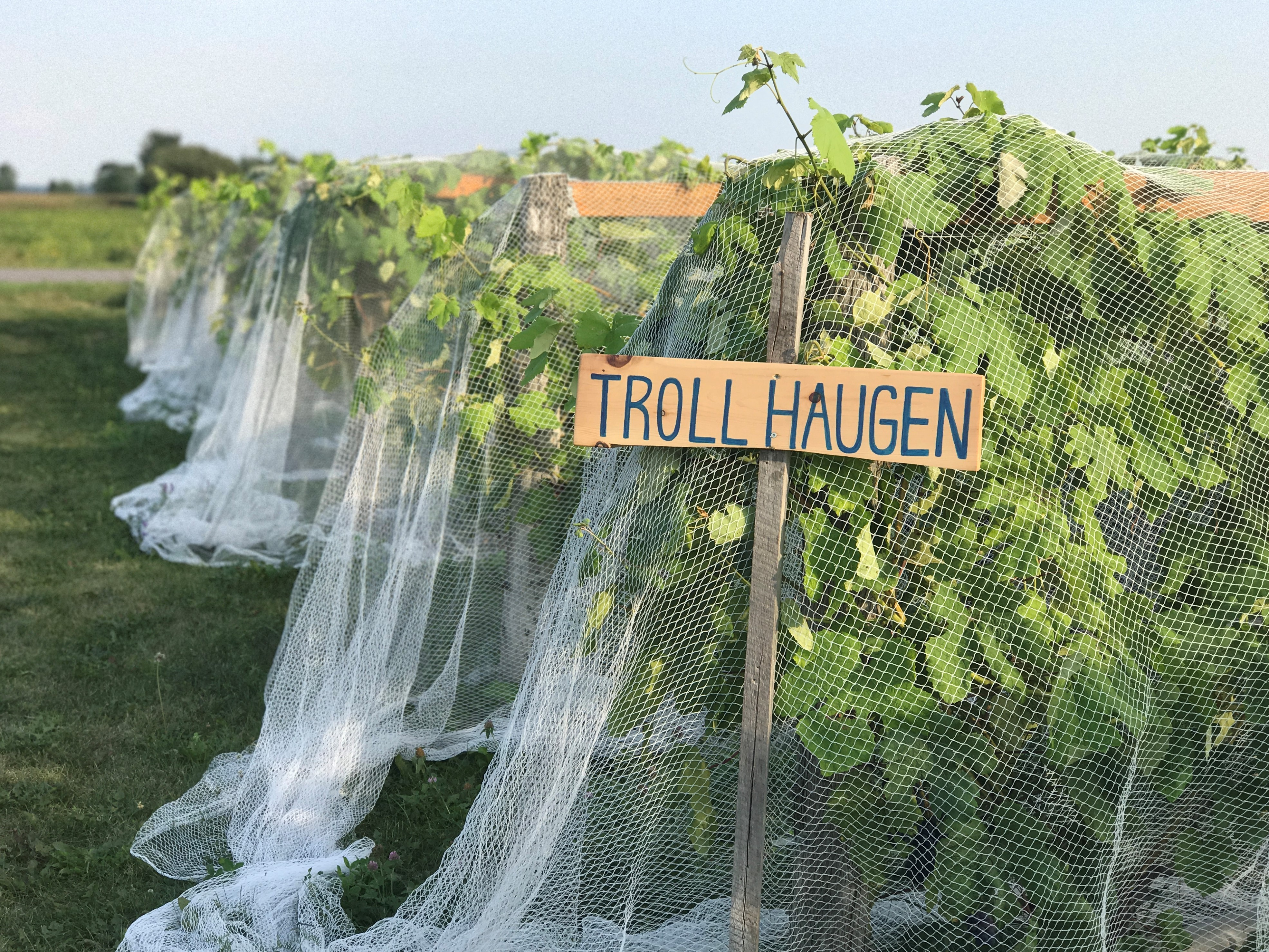 Troll Haugen