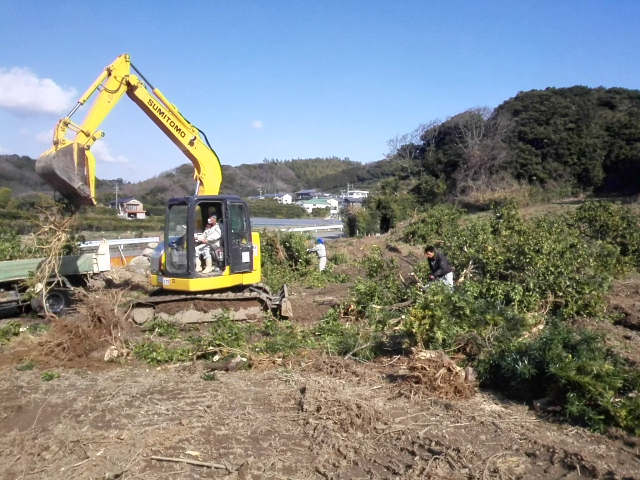 雑木の処分 伐開除根