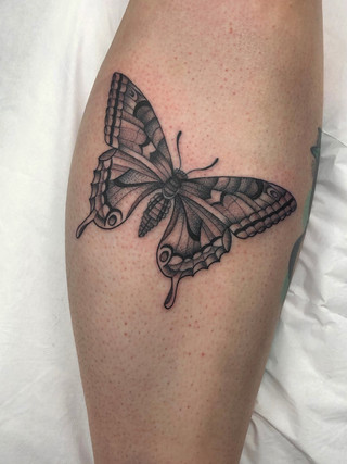 butterflybyjakexonleg.jpg