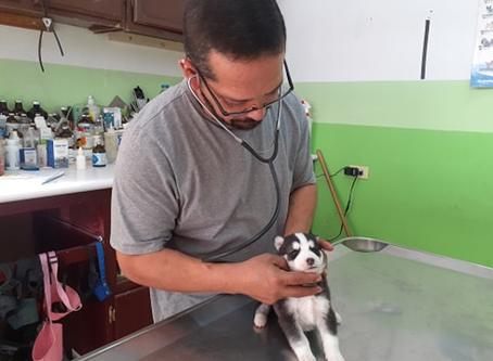 Reportaje  Moquillo: Asesino de Caninos