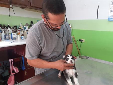 Reportaje| Moquillo: Asesino de Caninos