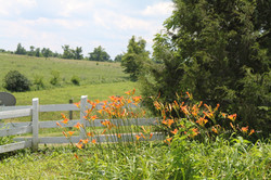 Danville June 2012 004