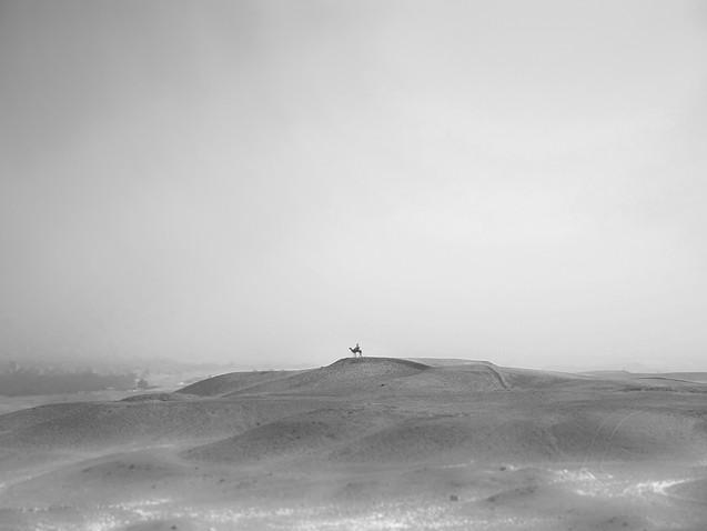 Egyptian camel rider surveys the desert.