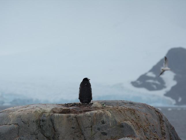 I wish I could fly, Antarctica