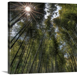 Canvas Arashiama Bamboo Forest