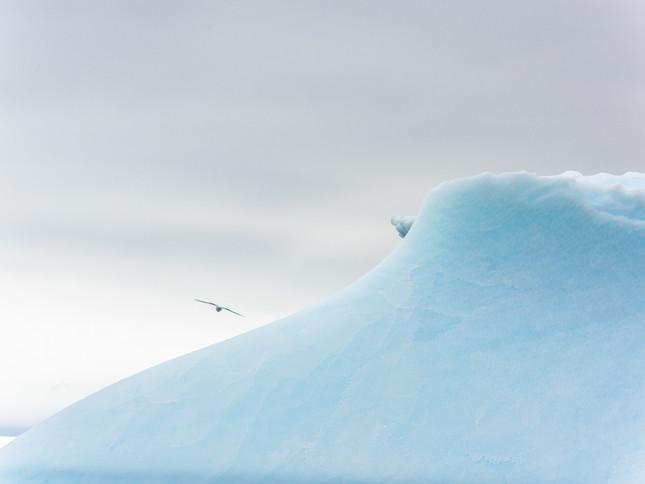 Flying past icebergs, Antarctica