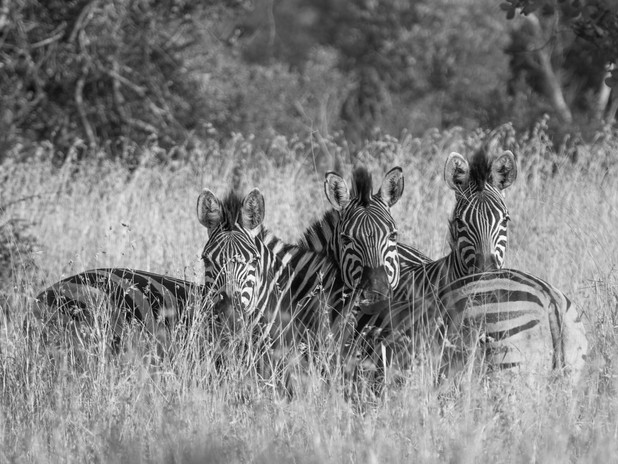 Safety in numbers, South Africa