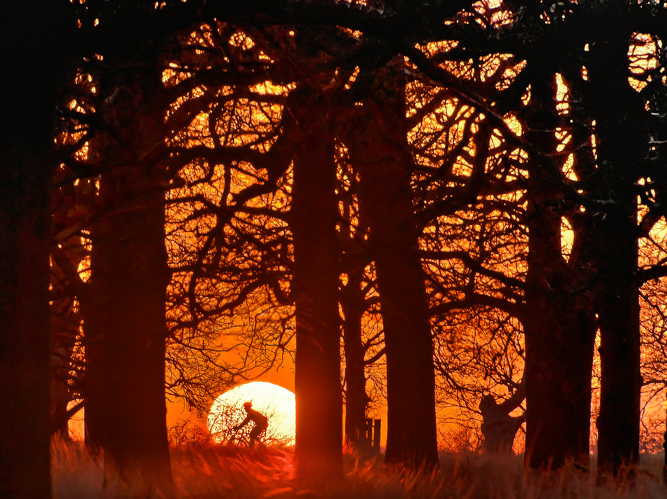 A cyclist is silhouetted by the sun in Richmond Park