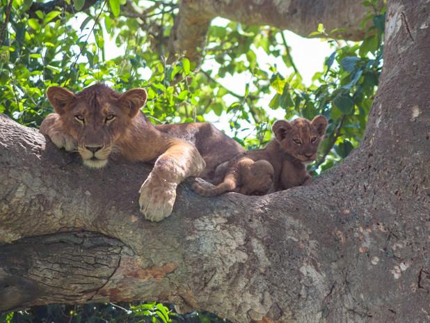 Mother and cub in Queen Elizabeth National Park, Uganda