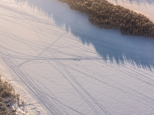 A husky sled is driven across a Lapland snowfield