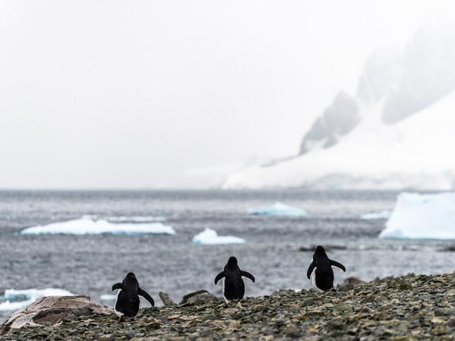 Walking towards sea, Antarctica
