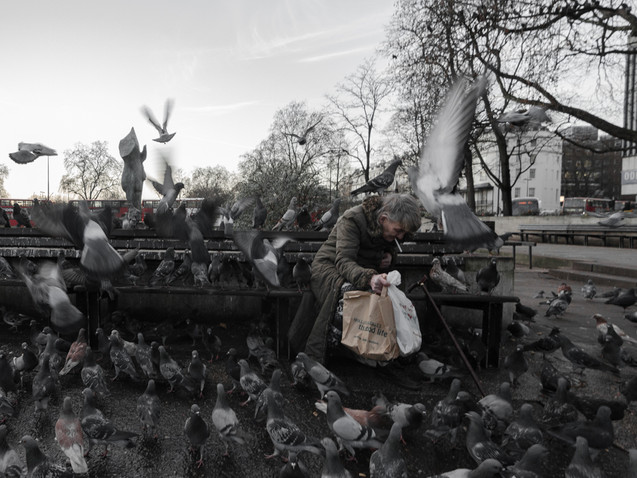 Feeding the birds, London