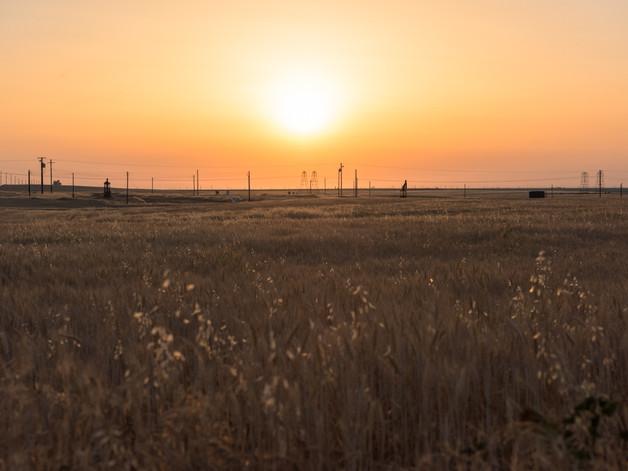 Californian cornfields.jpg