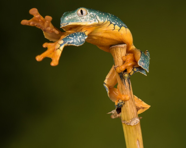 Tree frog making an escape