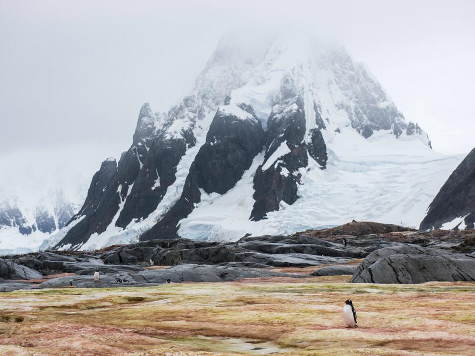 Walking across the algae field, Antarctica