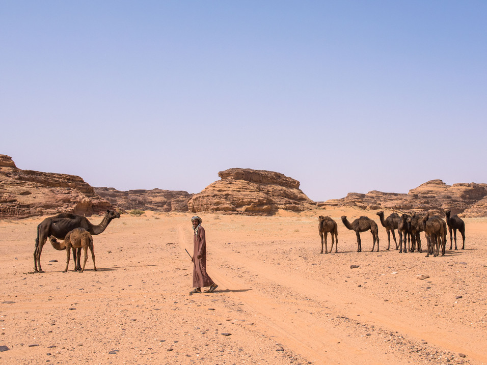 A camel herder at Sharaan Nature Reserve