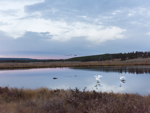 The aptly named Swan Lake in  Yellowston