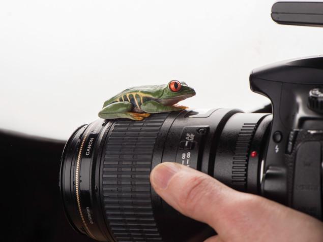 Tree frog learning camera skills