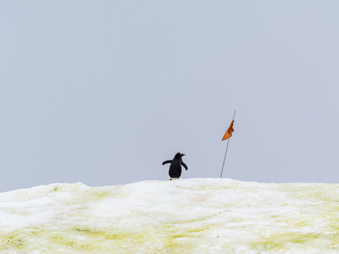 Reached the summit!, Antarctica