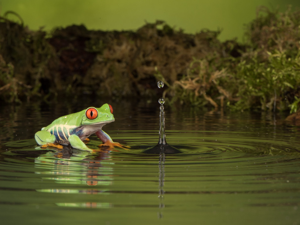Tree frog watching water splashesTree frog watching water splashes