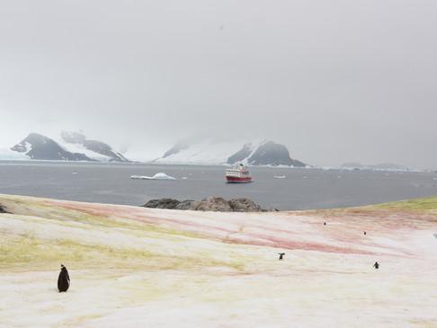 Running for the last boat, Antarctica