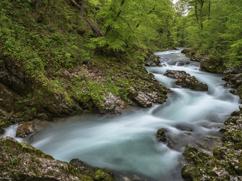 Smooth waters in Vintnar Gorge, Slovenia
