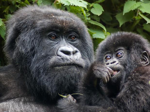 Mother and baby, Bwindi Impenetrable Forest, Uganda