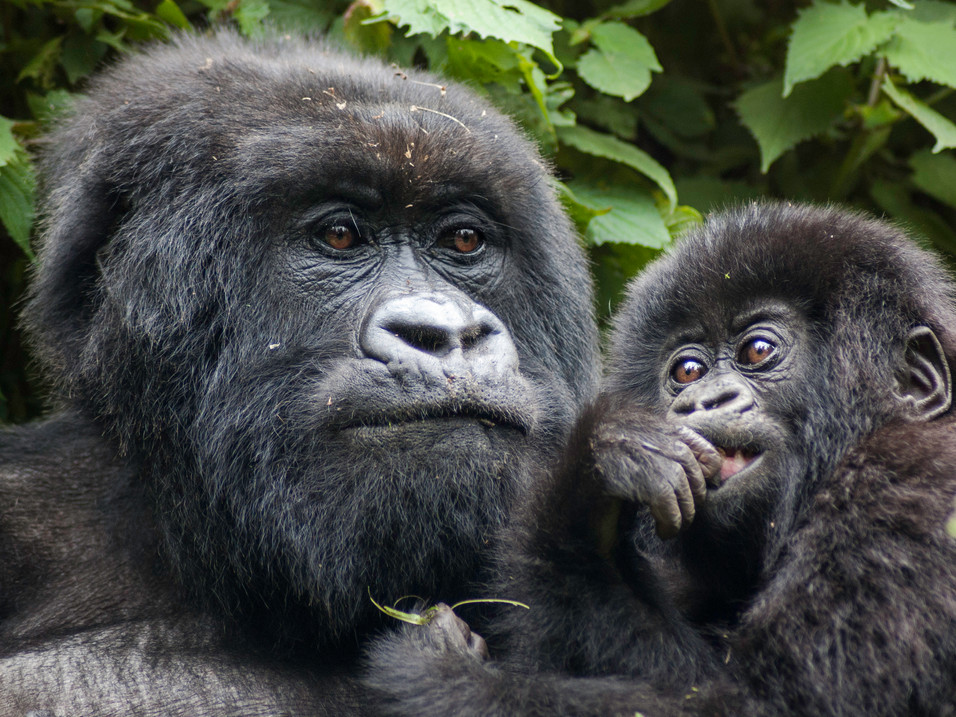 Mother and baby, Bwindi Impenetrable Forest, Uganda