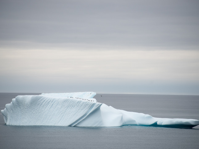 Seabird resting station, Antarctica