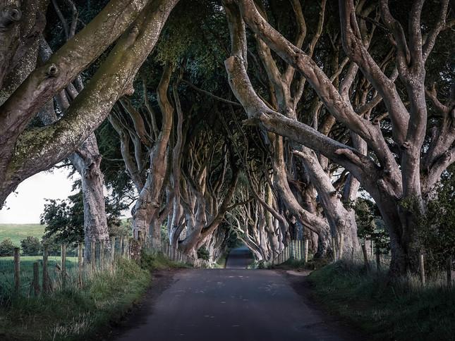 The Dark Hedges of County Antrim