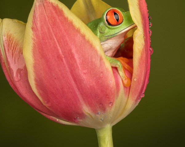 Tree frog peering out