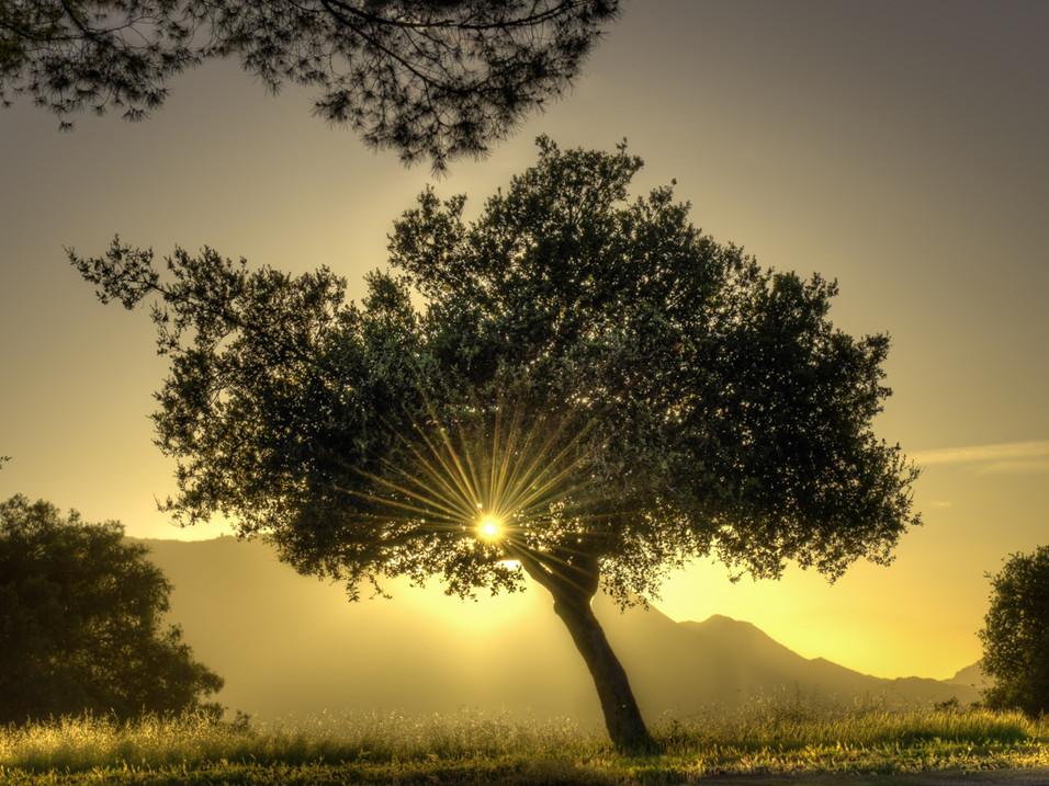 Sunburst through a tree, Los Angeles