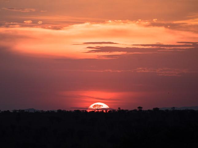Setting sun behind an Acacia tree, Serengeti