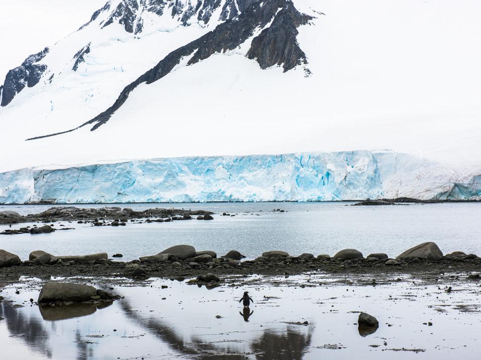Gentoo reflections, Antarctica