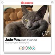 CATS_TindPurrr_JudePaw.jpg