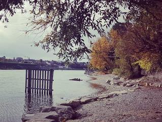 Herbst lieber Herbst 🌼💛🌻