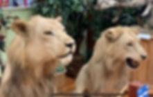 lionpic_edited_edited.jpg