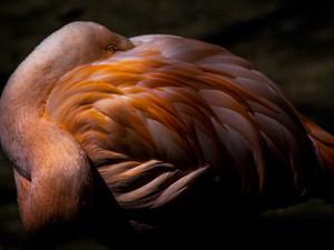 2015-04 Flamingo.jpg