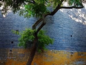 2013-08 Tree Wall B (Copenhagen).jpg