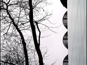 2010-12 Branches.jpg